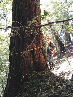 PHOTO BY NATALYNNE DELAPP, EPIC. - A 60-inch tree that is not marked to be cut.
