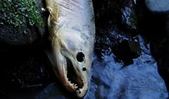 Last Call for Coho