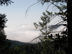 COURTESY REDWOOD FOREST FOUNDATION, INC - A fog Bank nestles in a valley in the Redwood Forest Foundation's Usal Redwood Forest.
