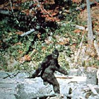 "BIGFOOT TRAPPED BY NORCAL FANATIC! A still frame, featuring ""Patty,"" from the infamous 1967 Patterson-Gimlin Film."