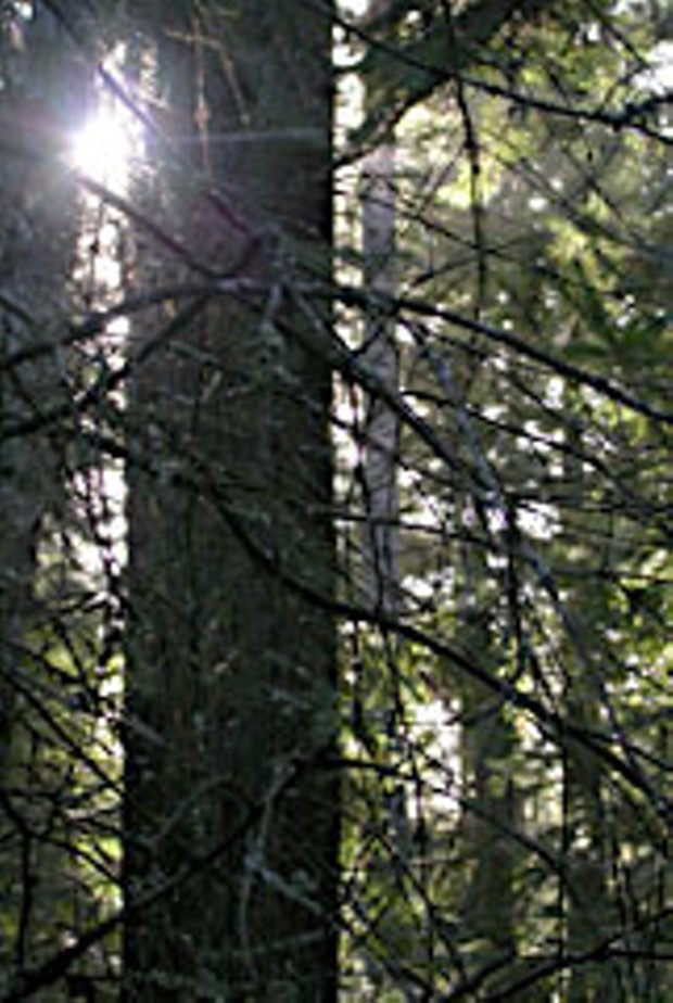 A sunny day in the van Eck forest. Photo by Heidi Walters.