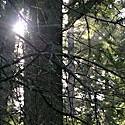 Mr. Van Eck's Forest