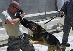 Air Force Public Affairs Sgt. J.G. Buzanowski snaps a photo of a military working dog, who snaps back in his own way. Photo courtesy of J.G. Buzanowski