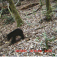BIGFOOT TRAPPED BY NORCAL FANATIC! Another trap is set... with mixed results