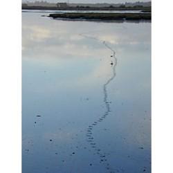 Arcata Marsh, photo by Heidi Walters
