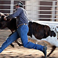 Last Cowboy Standing — A tale of rodeo culture in Humboldt County Bulldogging in action at the Orick rodeo. Photo by Yulia Weeks
