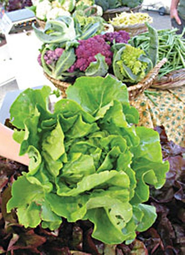 Butter lettuce from G Farms. Photo by Bob Doran.