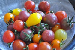 PHOTO BY SIMONA CARINI - cherry toms