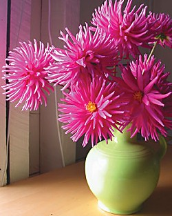 Dahlias in a Green Vase. Photo by Amy Stewart.