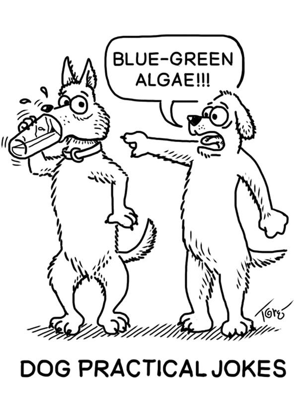 Dog Practical Jokes