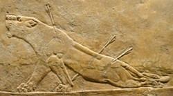 PHOTO BY BARRY EVANS - Dying lioness from the North Palace of Ashurbanipal, Nineveh, circa 640 BCE, now in the British Museum.