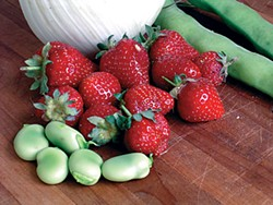 Fava beans, strawberries and fennel. Photo by Simona Carini