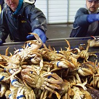 A Crab's Life