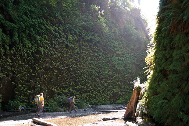 Fern Canyon - PHOTO BY DREW HYLAND