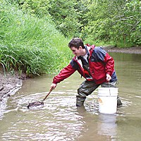 Love Me, I'm a Lamprey Fish biologist Damon Goodman collects lampreys in an Oregon creek for a genetics study . Photo courtesy U.S. Fish and Wildlife Service