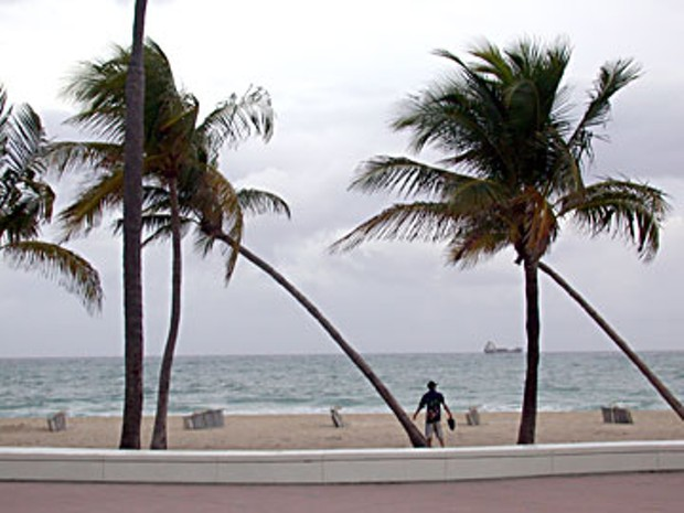 Fort Lauderdale palms. Photo by Amy Stewart.
