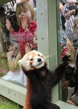 panda_and_kid_2.jpg