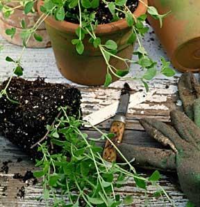 dirt-005p0107ll.jpg