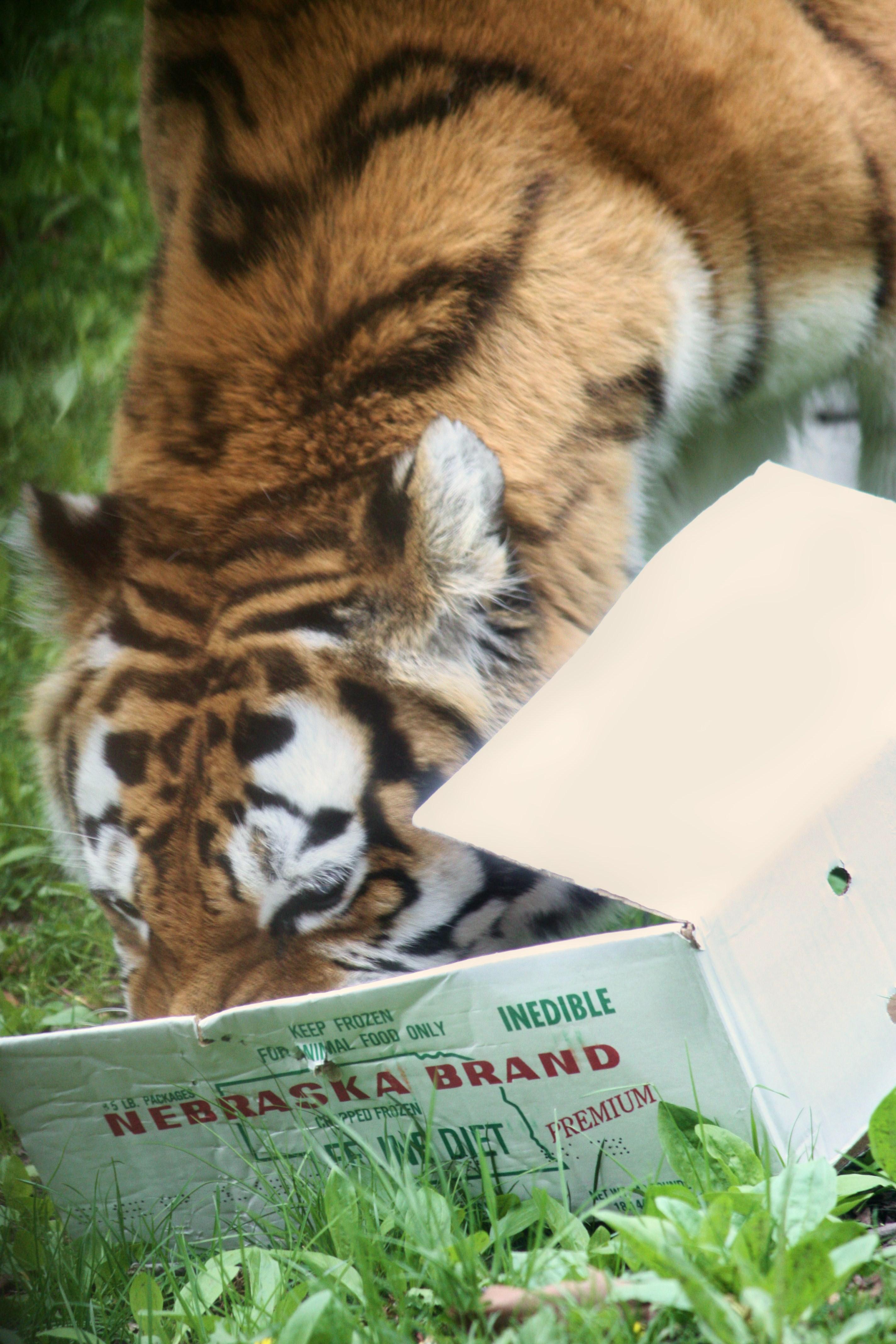 Go Tigers! - WIKIPEDIA