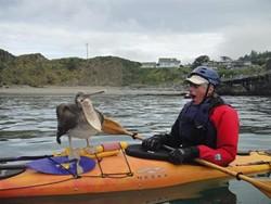 pelican-eats.jpg