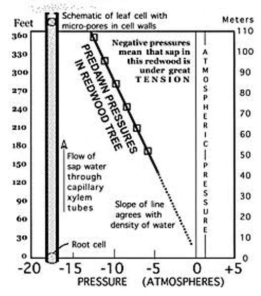 sci_diagram1011.jpg