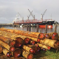 Logs to China