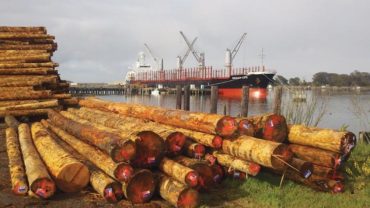Humboldt logs await shipment. - PHOTO BY RYAN BURNS