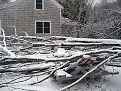 Ice-covered fallen tree in upstate New York. Photo by Michele Owens