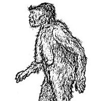"BIGFOOT TRAPPED BY NORCAL FANATIC! Illustration of ""The Old Lady"" — 7 feet tall, 600 pounds — from Roger Patterson's 1966 book Do Abominable Snowmen of America Really Exist? Drawn one year prior to shooting his famous footage."