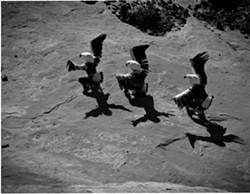 marmon_laguna_eagle_dancers.jpg