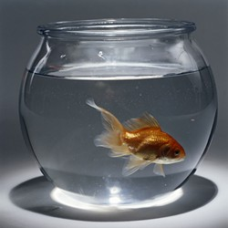 Is this goldfish's view of reality any more distorted than yours or mine?