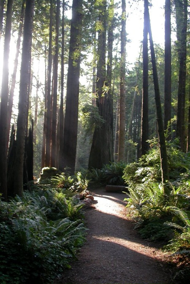 scaled_down_arcata_forest_by_heidi1.jpg