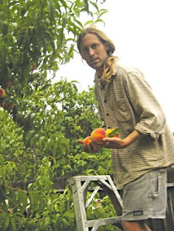 Jacques Neukom picking peaches. Photo by Bob Doran.