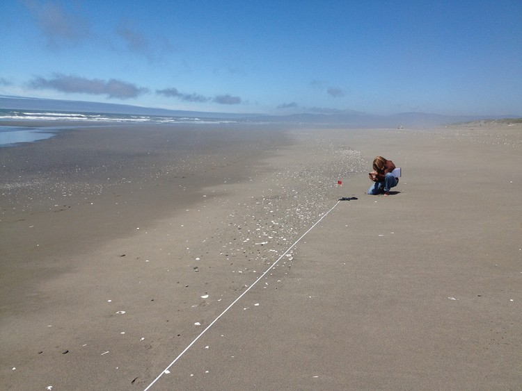 Jennifer Savage, with the Ocean Conservancy, began a two-year shoreline monitoring project last week to record marine debris, including anything dragged into the sea by the March 2011 Japan tsunami. - PHOTO BY HEIDI WALTERS