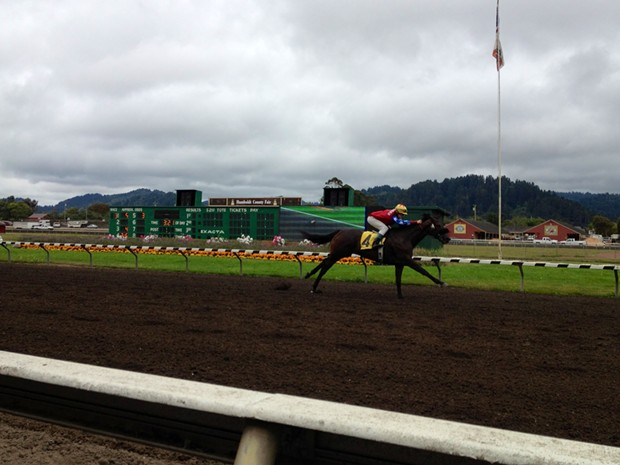 Jockey Brittany Smith bringing in Focus Now for its first win in California. At the Ferndale racetrack on Saturday, Aug. 17, 2013. - PHOTO BY HEIDI WALTERS