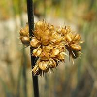 STAFF PICKS - Best Native Plant for Landscaping