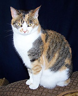 Kris Smith's colorful calico kitty. Photo by Don Garlick.
