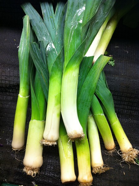 leeks - PHOTO BY BOB DORAN