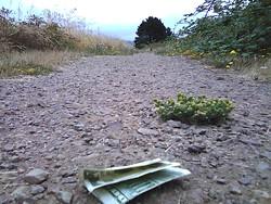 marsh_money.jpg