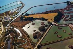 """""""Marsh high,"""" shot from the air by ellen land-weber."""