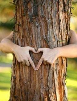 575ddaef_tree_lover.jpg