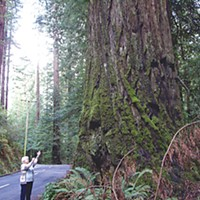 The Plane That Wasn't There Milushev's maternal grandmother on the Avenue of the Giants, shortly after his death. Photo courtesy of Richard Collier.