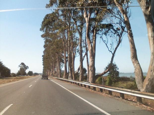 eucalyptus_101.jpg