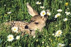 THINKSTOCK - No selfies with bambi.