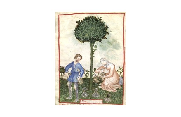 botanical-medieval-horticultural-practices-7.jpg