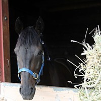Eight Days at the Races Oregon trainer Nancy Klapatch's horse, Black Magic.