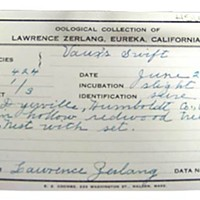 Birders of America Paperwork from Lawrence Zerlang's collecting days. Photo by Heidi Walters