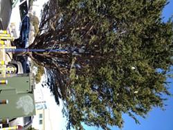 herons-in-cypress.jpg