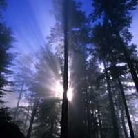 Lost Coast Triology: Part Three