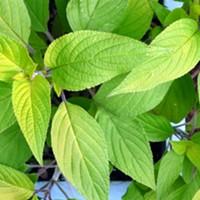 Drinkable Herbs
